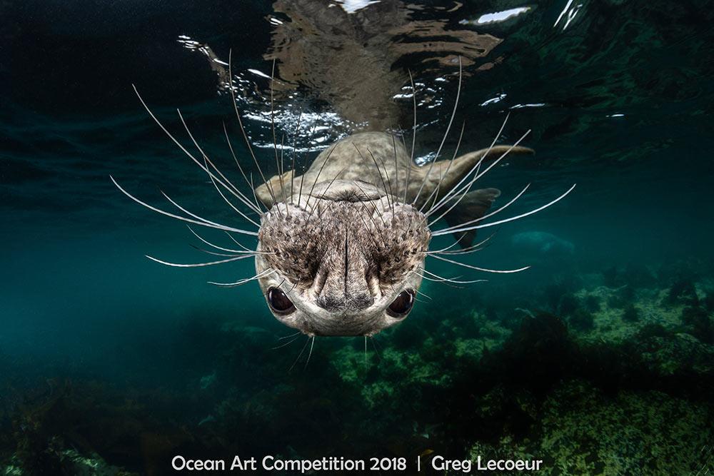 Photos Stunning Life Under The Ocean Wave