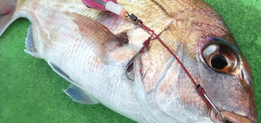 日立沖真鯛