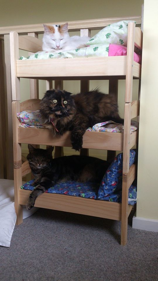 IKEA-cat-beds