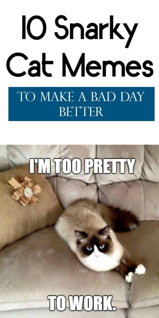 CatMemes snarky cat memes