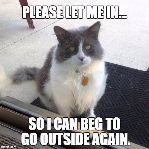 silly cat memes