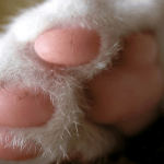 cat paw facts
