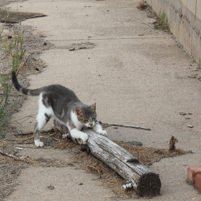 Why Cats Need Scratching Posts