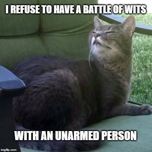 best cat memes