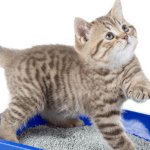 best kitty litter mats