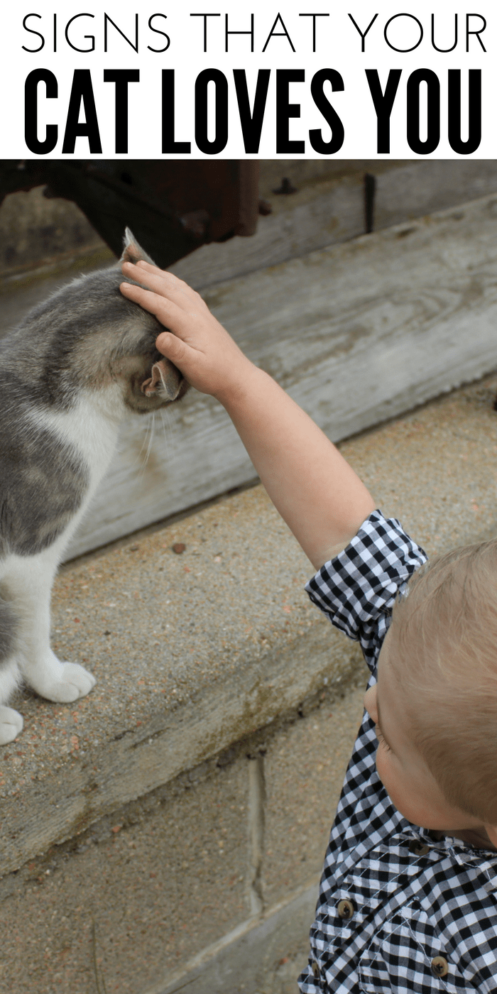Signs That Your Cat Loves You