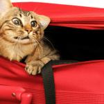 keep your cat calm cat calming