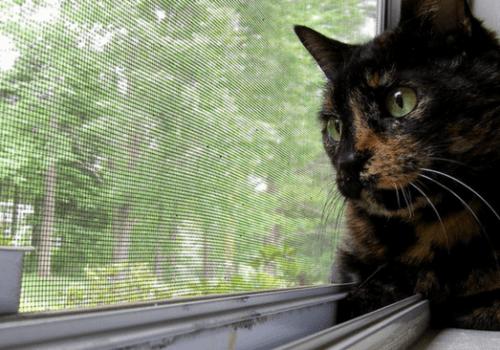 #CrazyCatLady #CatBehaviors #CatCare Cat Behavior