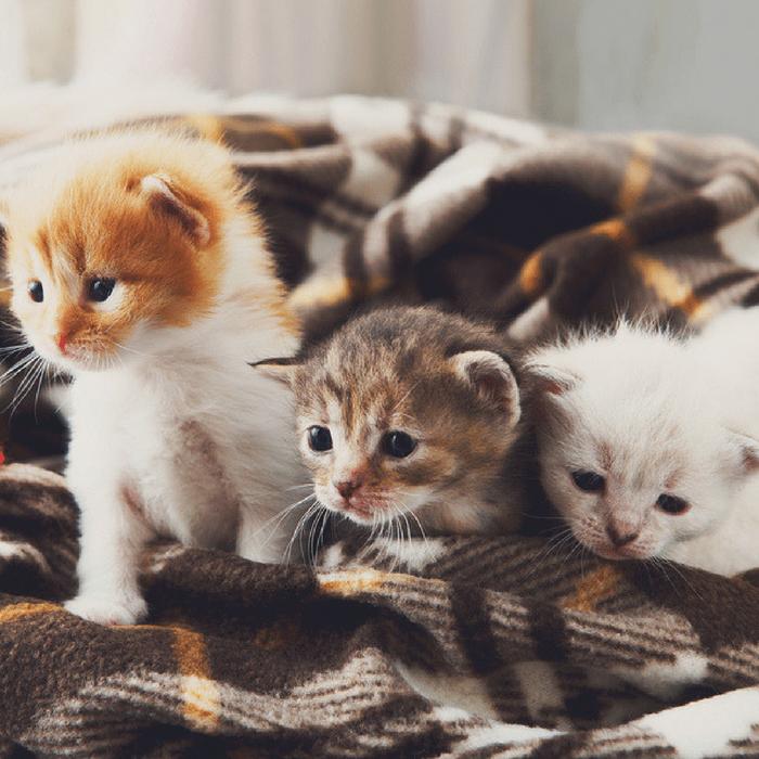 #CrazyCatLady #TopCatNames #CatLover Kitten Names