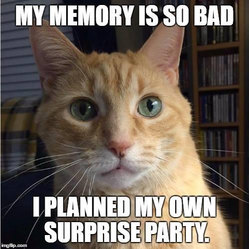 #CrazyCatLady #CatLover #CatMemes best cat memes