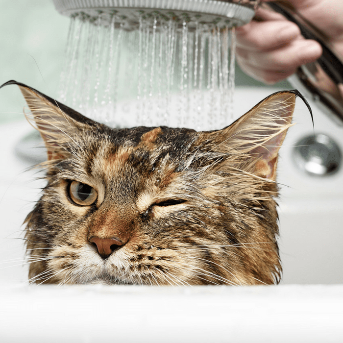 #CrazyCatLady #CatFacts #CatVsWater why do cats hate water