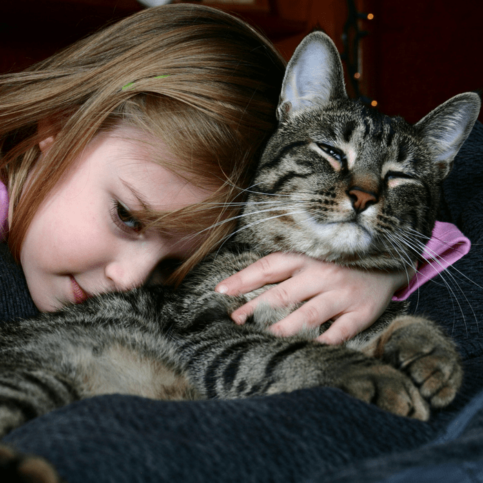 #CrazyCatLady #CatLovers #KidsWhoLoveCats Cat books for kids