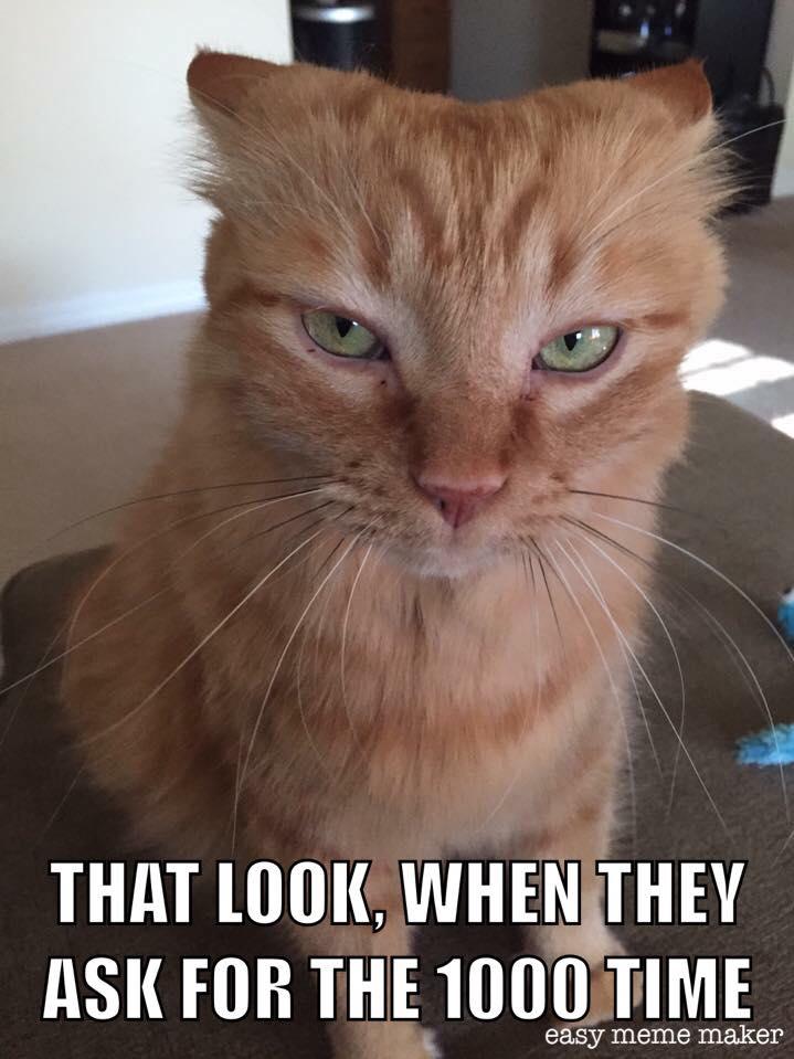#CrazyCatLady #CatCare #AdoptionOfCat silly cat memes