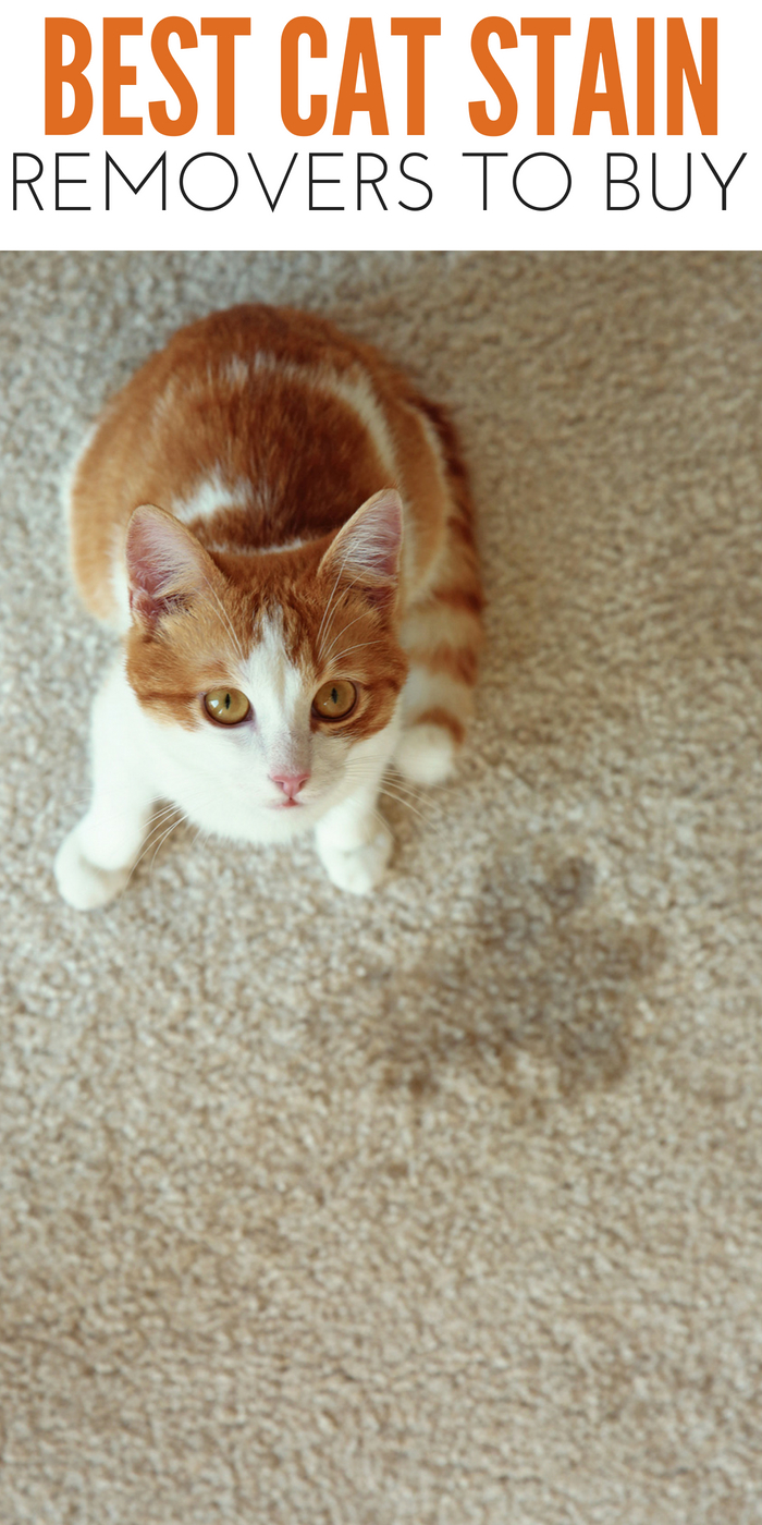 #CrazyCatLady #CatStains #CatCare pet stain removers