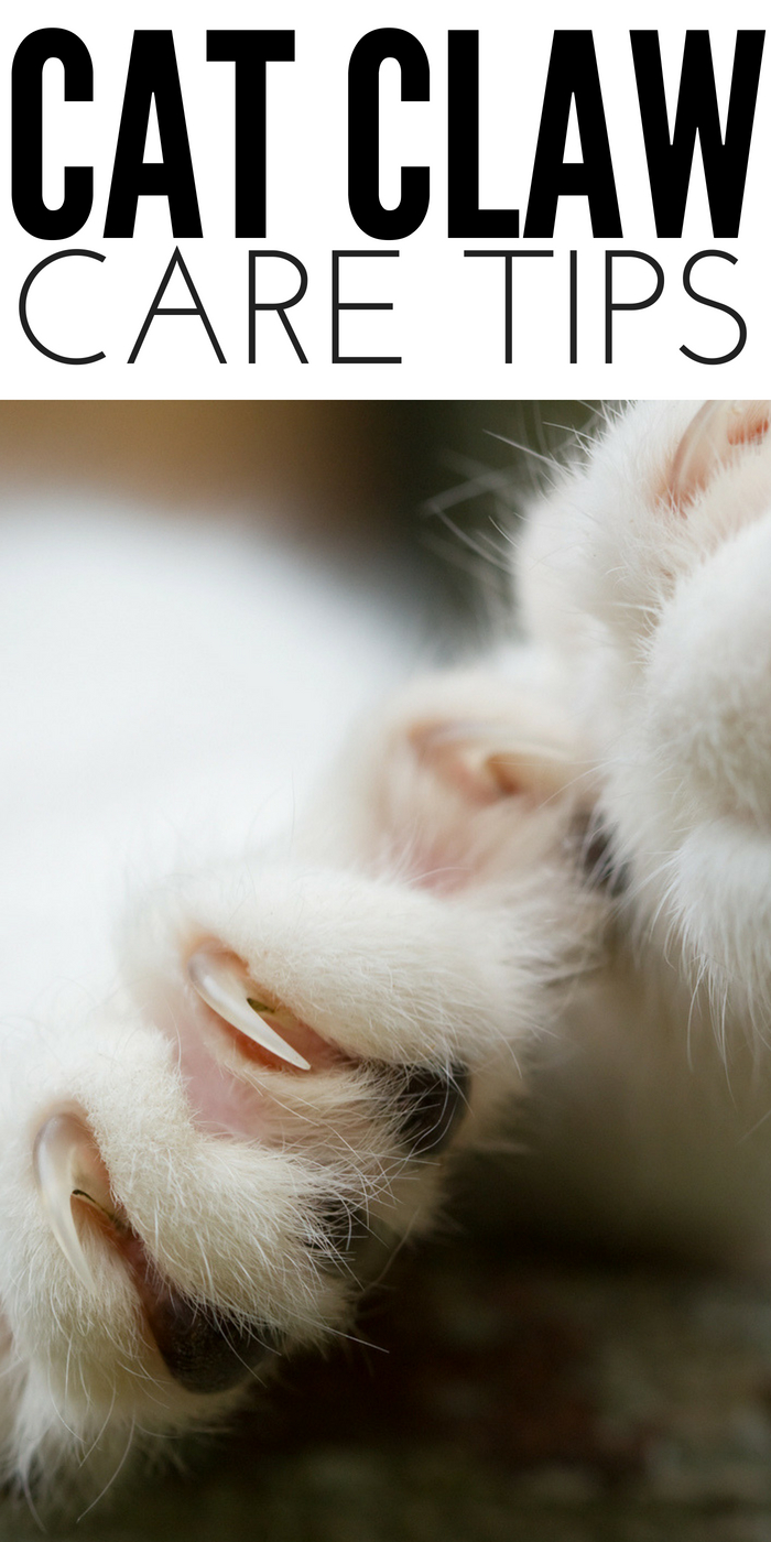 #CrazyCatLady #CatCare #CatClaws cat claw care tips