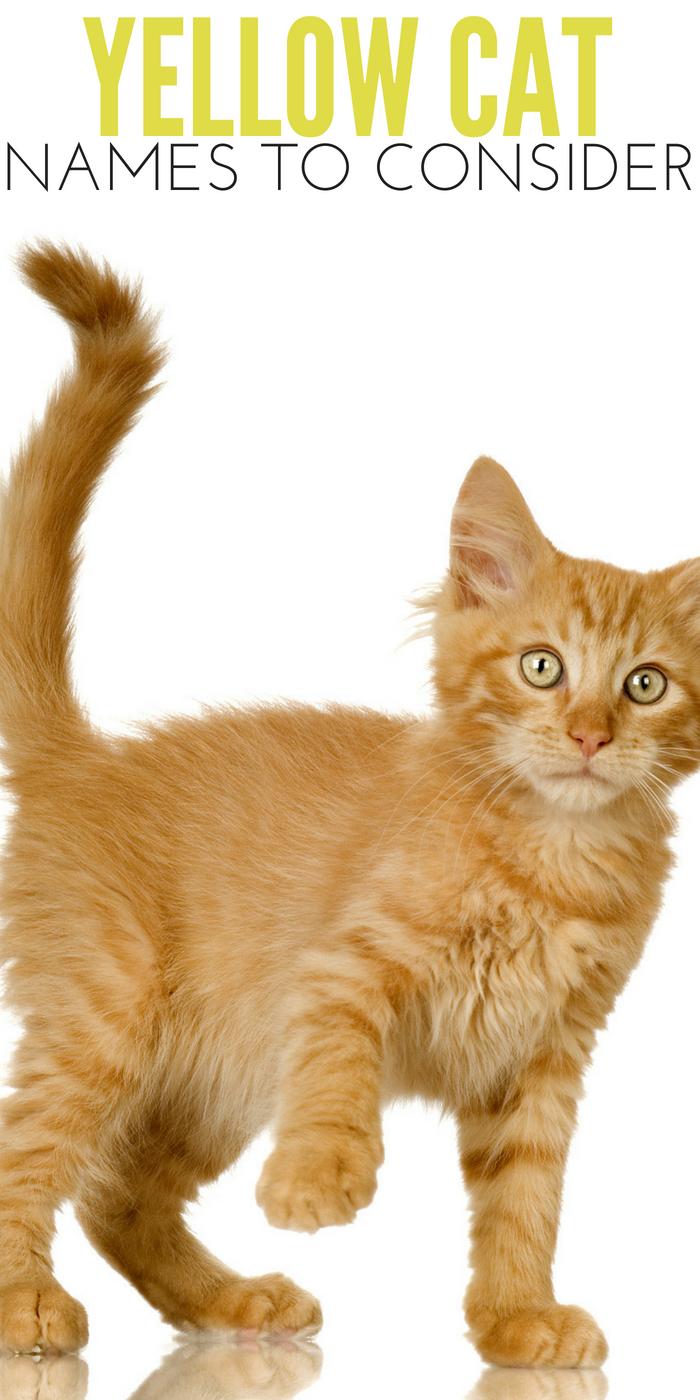 #CrazyCatLady #CatNames #YellowCats yellow cat names