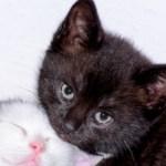 how to bottle feed a kitten, can a kitten drink from a bottle