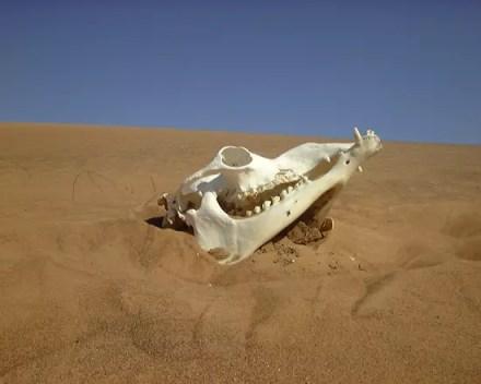 cranes-dunes-dubai-emirats-arabes-unis-6155664325-913954.jpg