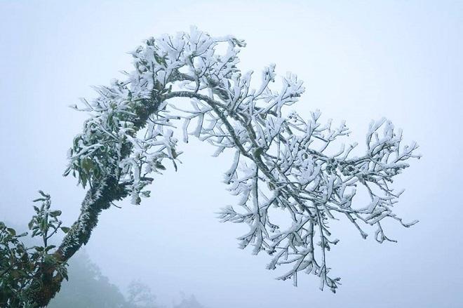 Rét khủng khiếp, cây cối hóa đá trên đỉnh Mù Cang Chải - 8