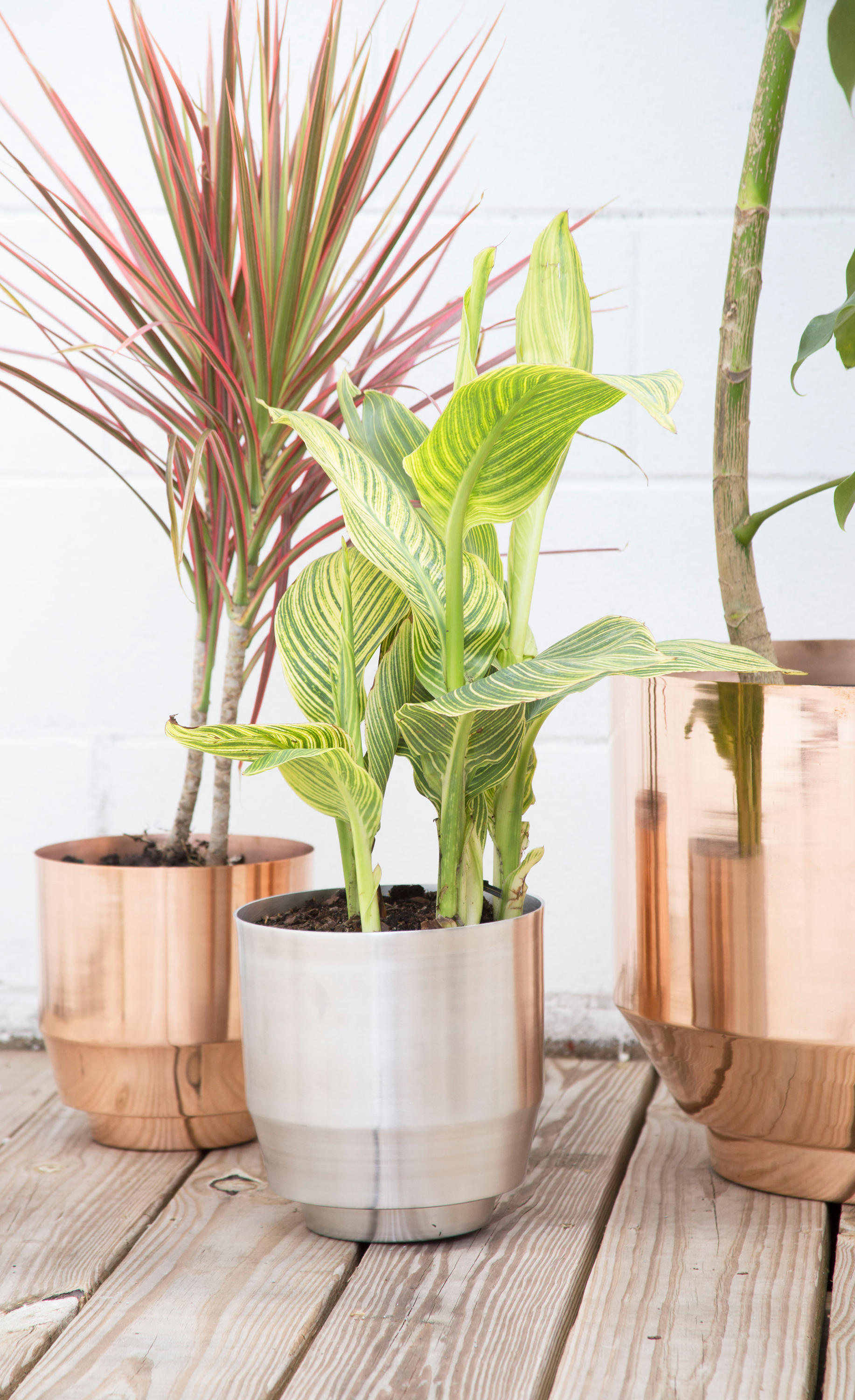 Indoor Spun Bowl 8 Quot Copper Plant Pots From Yield