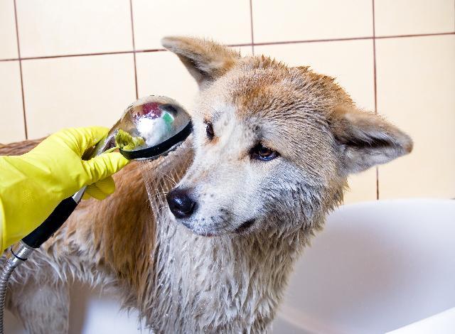 Banho e Tosa de Cães