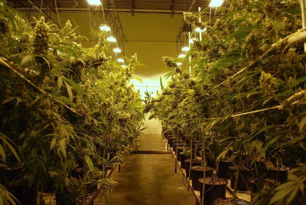 Large Ohio Medical Marijuana Grow Licenses Awarded
