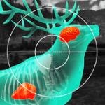 تنزيل لعبة صيد الحيوانات فى الغابة Wild Hunt 3D APK للاندرويد