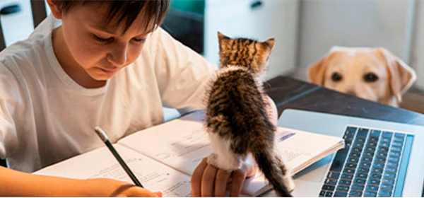 A young boy doing his homework while a multi-colored kitten stands on his forearm and a white dogs peers over the side of the table.