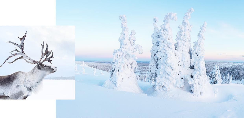 Special deals to winter wonderland