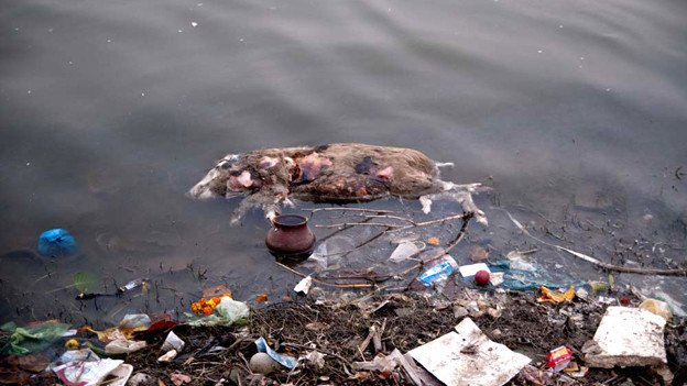 Ganga_River_Pollution-2.jpg (혐) 인도인들의 성수 겐지스 강 실태.jpg