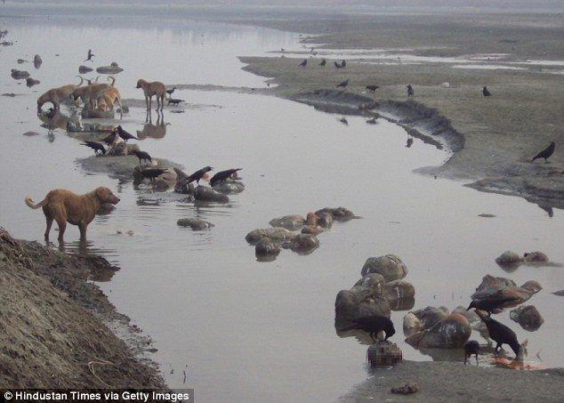24B6A20400000578-2910274-image-a-17_1421337993483.jpg (혐) 인도인들의 성수 겐지스 강 실태.jpg