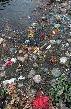 4b14fe493bd950cef7555ab5b10bd1b2.jpg (혐) 인도인들의 성수 겐지스 강 실태.jpg