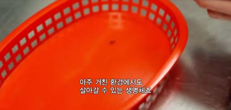 실험) 전자레인지에 개미를 넣고 돌리면 어떻게 될까?