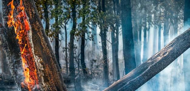 Imágenes de Fuego Arbusto | Vectores, fotos de stock y PSD gratuitos