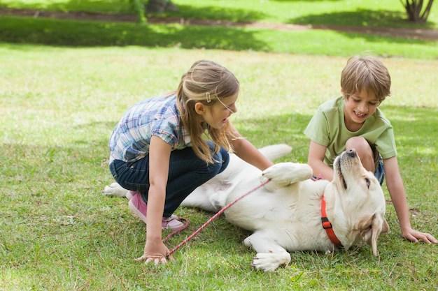 El es un perrito labrador de nombre Corchito y esta siendo consentido por sus amos