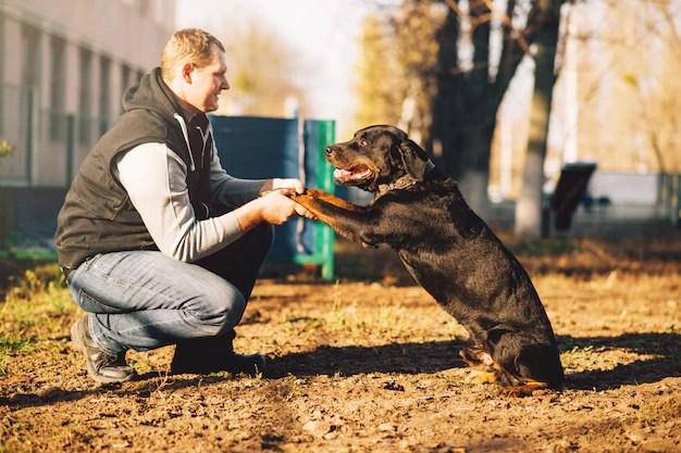 Bloodhound adulto em treinamento para cão policial cães de caça