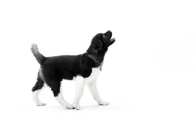 Cachorros que latem muito: Como lidar?