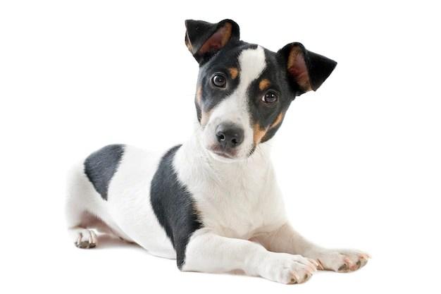 O que saber antes de adotar um cachorro