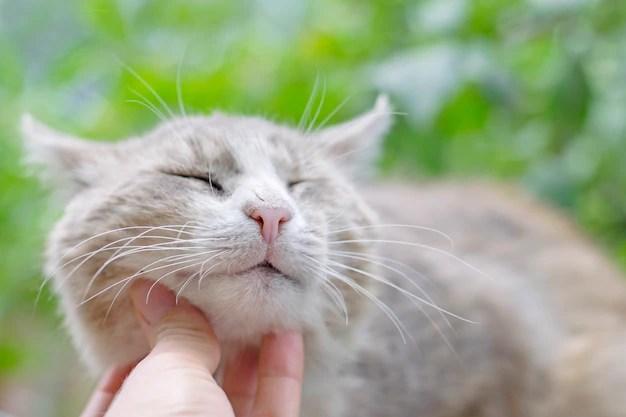 Affectionate homeless cat closeup Premium Photo