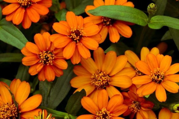 Background of pretty orange flowers  cute Photo   Premium Download Background of pretty orange flowers  cute Premium Photo
