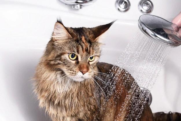 Cat bath Premium Photo
