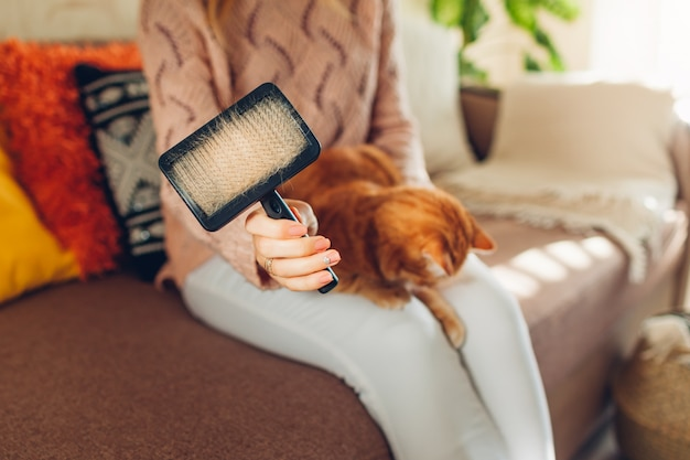 Combing ginger cat with comb brush at home. woman owner taking care of pet to remove hair. Premium Photo