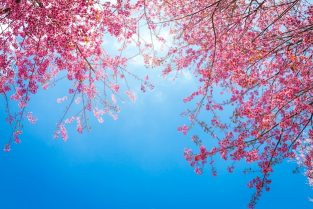 Cute tree branches with pink flowers Free Photo