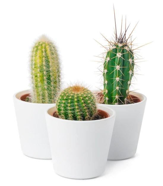 Premium Photo Different Types Of Cactus Isolated Close Up