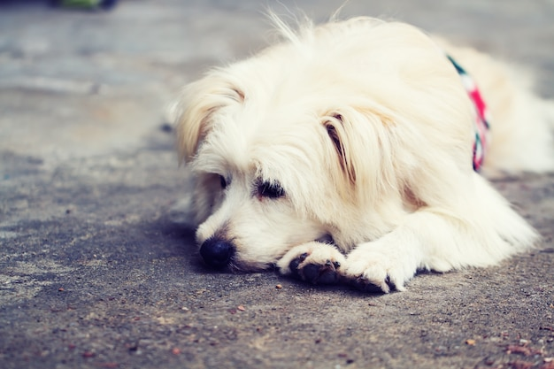 Dog lonely alone Free Photo