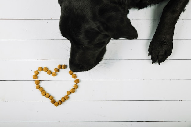 Dog sniffing food heart Free Photo