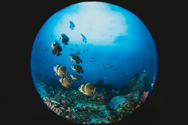 36cm Purple Artificial Water Plants Grass Aquarium Scene Supply Fish Full Size Of Tank Volcano Finding Nemo