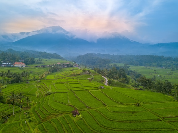 Premium Photo Indonesia Bali Island Evening Terraces Of Rice Fields Fog In The Mountains In The Background Aerial View