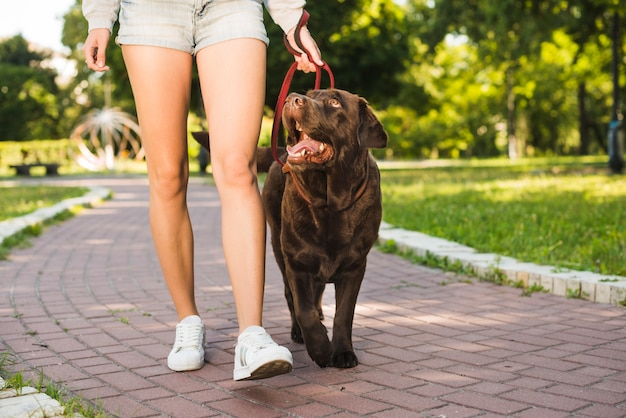 Lowsection view of a woman with her dog walking on walkway in park Free Photo