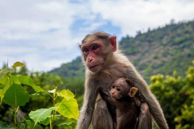 猿とその赤ちゃん 無料写真